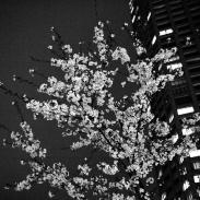 14_Tokyo-blur_16
