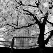 24_Tokyo-blur_10